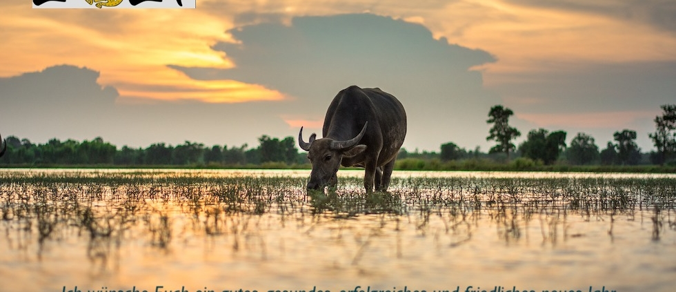 2021- Jahr des Büffels, Qihai TCM & QiGong, Nicola Maureder